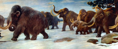Wooly_Mammoths