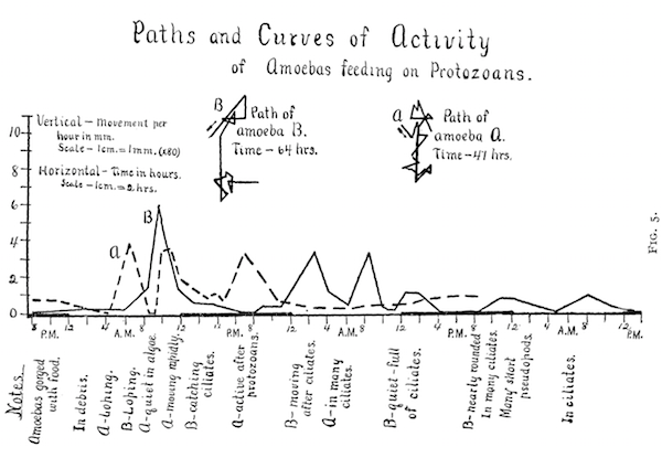 graph showing activity patterns of the amoeba