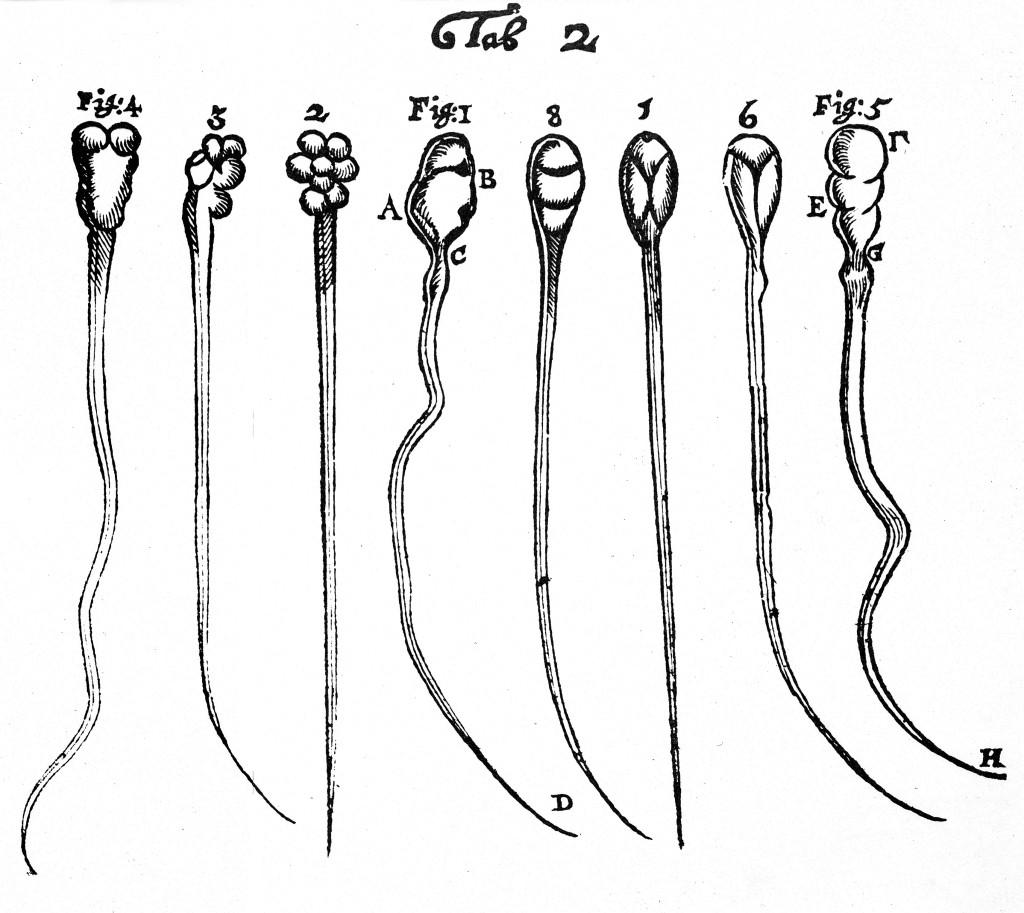 Antonie van Leeuwenhoek, Wellcome Images